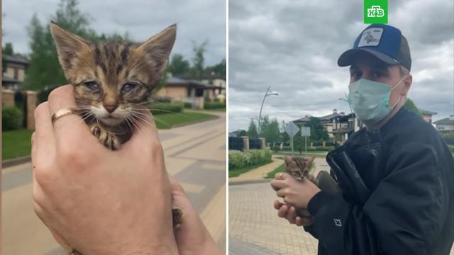 «Ни минуты не думал»: Дима Билан спас бездомного котенка.Билан, животные, знаменитости, кошки, шоу-бизнес.НТВ.Ru: новости, видео, программы телеканала НТВ