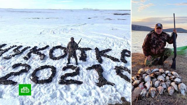 Полиция ищет охотника, который устроил фотосессию на фоне сотни мертвых гусей.Чукотка, жестокость, охота и рыбалка, полиция, птицы.НТВ.Ru: новости, видео, программы телеканала НТВ
