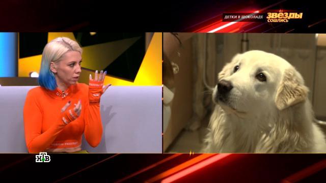 Дочь Ирины Салтыковой рассказала, как хирург спас ее разорванное собакой лицо.знаменитости, музыка и музыканты, собаки, эксклюзив.НТВ.Ru: новости, видео, программы телеканала НТВ