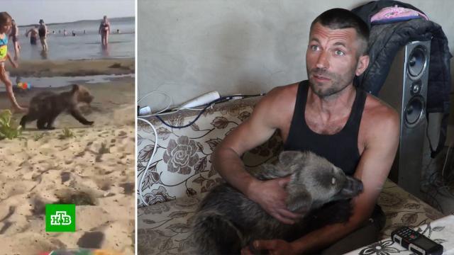 Бывший участковый рассказал, зачем привел медвежонка на пляж Чебаркуля.Челябинская область, животные, медведи.НТВ.Ru: новости, видео, программы телеканала НТВ