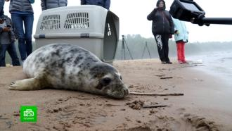 На Финском заливе устроили выпускной для тюленят