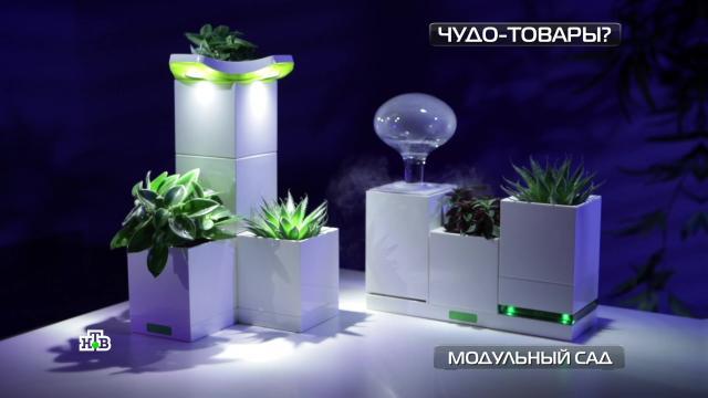 Модульный сад и«неубиваемые» кроссовки.НТВ.Ru: новости, видео, программы телеканала НТВ