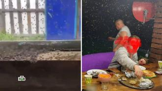 Кровожадные насекомые атаковали российские города.НТВ.Ru: новости, видео, программы телеканала НТВ