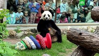 Пандам Московского зоопарка подарили игрушки вДень защиты детей