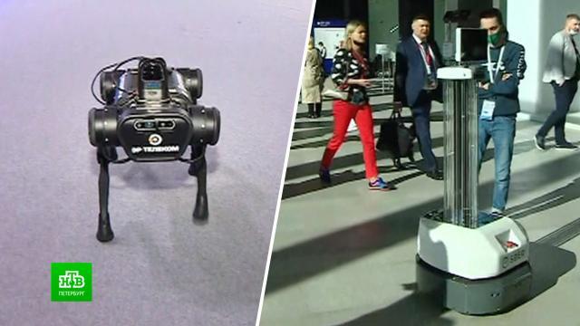 Роботы всех мастей и «Победа» с гусеницами: на ПМЭФ-2021 показали технологические новинки.ПМЭФ, Санкт-Петербург, изобретения, технологии, экономика и бизнес.НТВ.Ru: новости, видео, программы телеканала НТВ