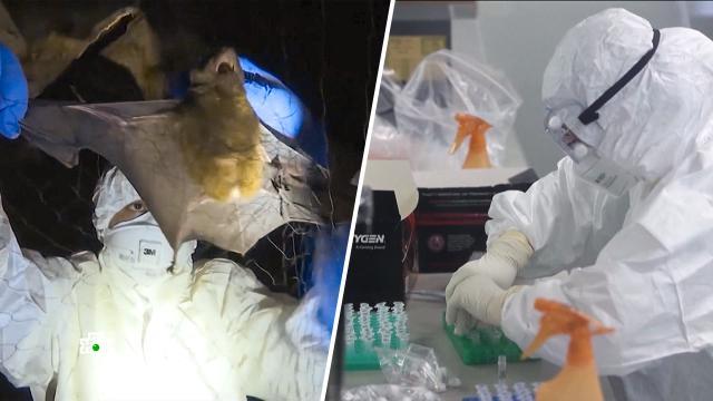 Ученые назвали признак лабораторного происхождения COVID-19.Китай, болезни, здравоохранение, коронавирус, наука и открытия, эпидемия.НТВ.Ru: новости, видео, программы телеканала НТВ