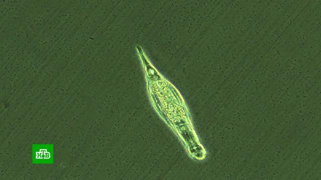 Сенсация вмире науки: ученые оживили <nobr>червей-коловраток</nobr>, которые провели взамерзшей почве 24тыс. лет
