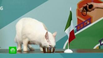 Кот-оракул Ахилл предсказал победу итальянцев в матче открытия Евро-2020