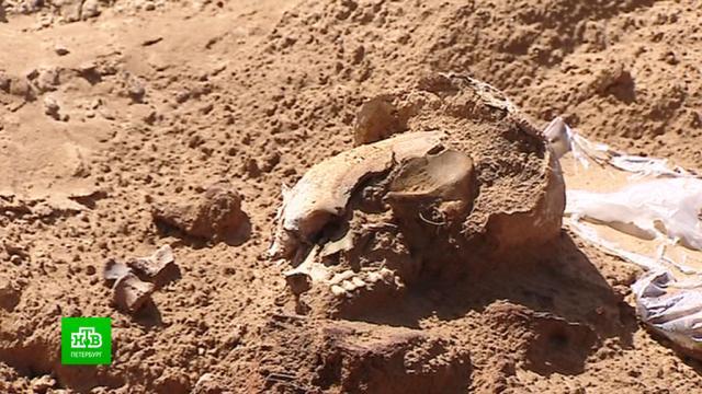 Поисковики: история вскрытого строителями воинского захоронения станет прецедентной