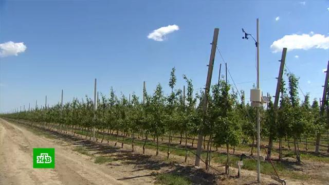 Передовые <nobr>ноу-хау</nobr> помогли аграриям Крыма решить проблему нехватки воды