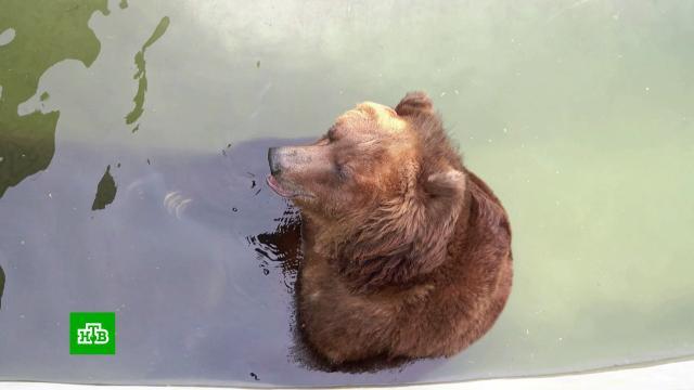 ВМосковском зоопарке рассказали, как помогают животным справиться сжарой.Москва, животные, зоопарки, лето, погода.НТВ.Ru: новости, видео, программы телеканала НТВ