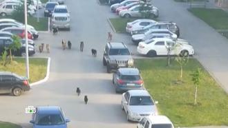 Как в России предлагают решать проблему бродячих собак.НТВ.Ru: новости, видео, программы телеканала НТВ