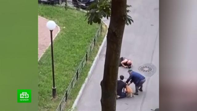 Владелец бойцовых стаффордов держит встрахе соседей.Санкт-Петербург, животные, нападения, скандалы, собаки.НТВ.Ru: новости, видео, программы телеканала НТВ