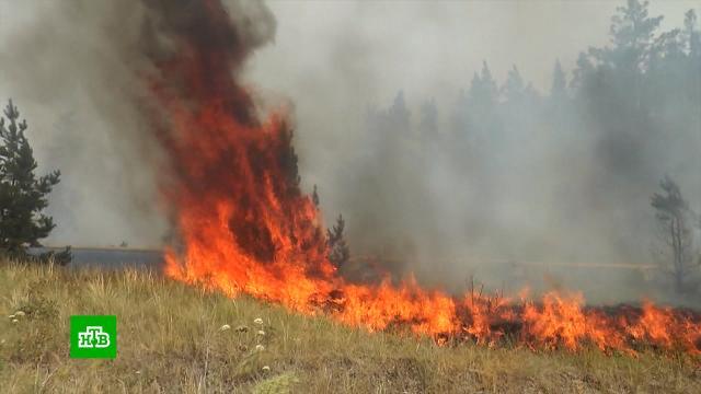 Огонь охватил 5тысяч гектаров леса вЧелябинской области