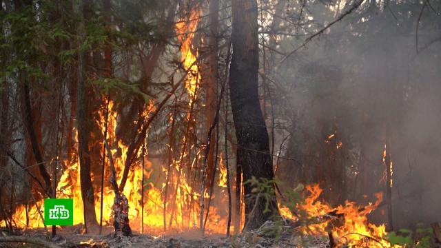 За сутки вЯкутии загорелось еще 70тыс. гектаров леса.МЧС, Якутия, лесные пожары, пожары.НТВ.Ru: новости, видео, программы телеканала НТВ