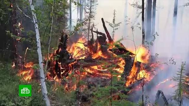 Один человек погиб из-за лесных пожаров вЧелябинской области.Челябинская область, лесные пожары.НТВ.Ru: новости, видео, программы телеканала НТВ