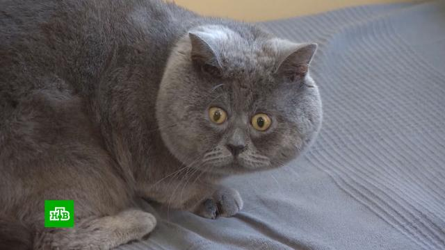 «Вечно удивленный» ростовский кот Федя стал мировой звездой.Интернет, животные, кошки, соцсети.НТВ.Ru: новости, видео, программы телеканала НТВ