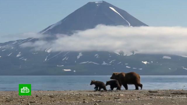 На Камчатке начали устанавливать «медвежьи» дорожные знаки.Камчатка, дорожное движение, животные, медведи.НТВ.Ru: новости, видео, программы телеканала НТВ