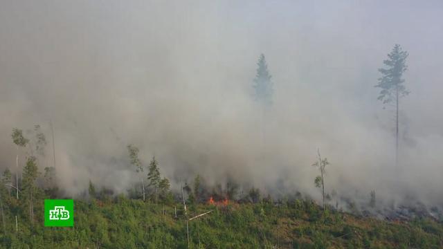 Глава МЧС прибыл в Карелию для контроля за тушением лесных пожаров.Карелия, МЧС, лесные пожары.НТВ.Ru: новости, видео, программы телеканала НТВ