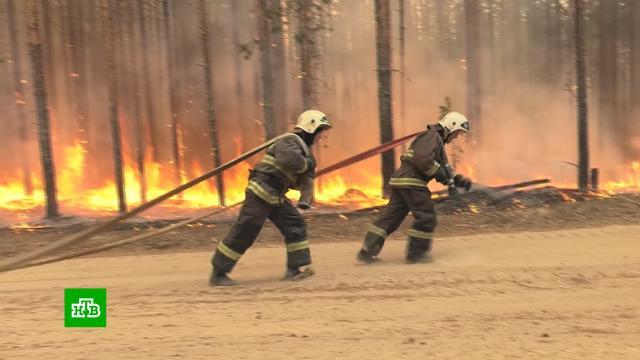 Огонь наступает: в Карелию пришла опасная атмосферная засуха.Карелия, лесные пожары, пожары.НТВ.Ru: новости, видео, программы телеканала НТВ