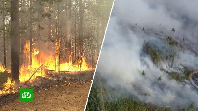 Площадь пожаров в Карелии превысила 6, 5 тыс. га.Карелия, лесные пожары.НТВ.Ru: новости, видео, программы телеканала НТВ