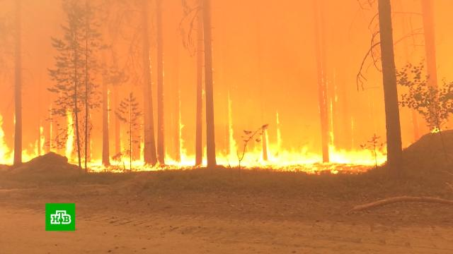 Карельский поселок оказался в кольце лесных пожаров.Карелия, лесные пожары.НТВ.Ru: новости, видео, программы телеканала НТВ