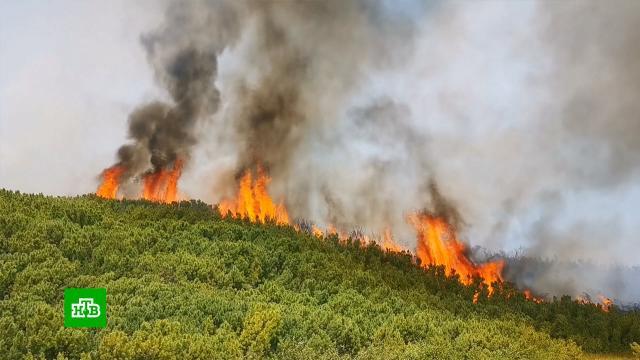 Спасатели ликвидировали крупный природный пожар на Камчатке.Камчатка, пожары.НТВ.Ru: новости, видео, программы телеканала НТВ