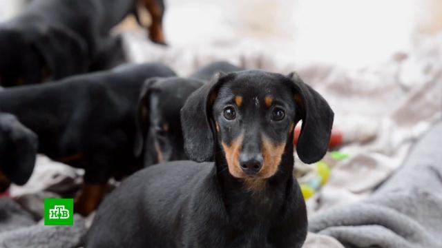 Животные признаны разумными существами: суть британского закона озащите питомцев.Великобритания, животные, законодательство, кошки, обезьяны, приюты для животных, собаки.НТВ.Ru: новости, видео, программы телеканала НТВ