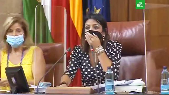 Крыса сорвала заседание парламента вАндалусии.Испания, животные, курьезы, парламенты.НТВ.Ru: новости, видео, программы телеканала НТВ