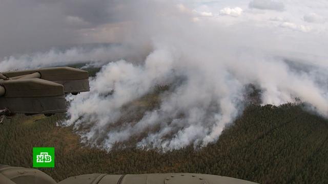 Масштаб бедствия ужасает: вКарелии набирают добровольцев для тушения пожаров.Карелия, лесные пожары, стихийные бедствия.НТВ.Ru: новости, видео, программы телеканала НТВ