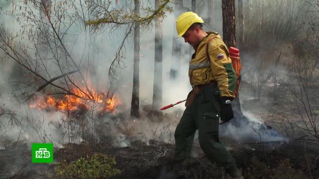 «Сплотились перед общей бедой»: тушить горящие вЯкутии леса помогают добровольцы.Якутия, лесные пожары.НТВ.Ru: новости, видео, программы телеканала НТВ