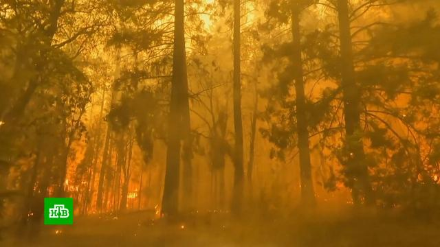 США и Испания не могут справиться с природными пожарами.Испания, США, лесные пожары, стихийные бедствия.НТВ.Ru: новости, видео, программы телеканала НТВ