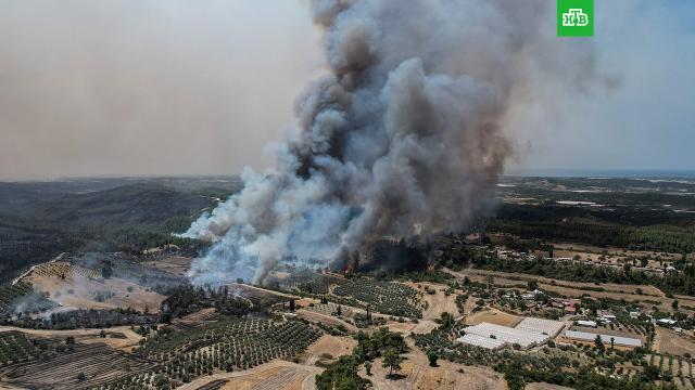 Эрдоган назвал возможную причину лесных пожаров вТурции