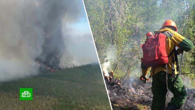 ВЯкутии за сутки потушили более 60тысяч гектаров леса.Якутия, лесные пожары.НТВ.Ru: новости, видео, программы телеканала НТВ