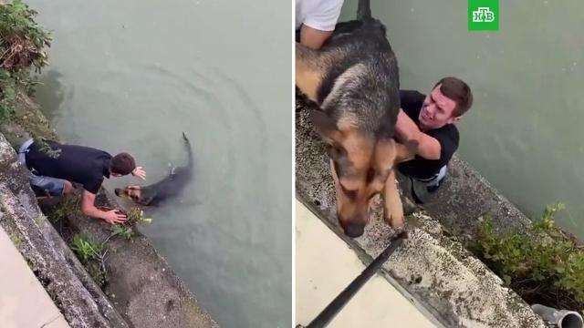В Сочи прохожие спасли тонущую в реке собаку.животные, Краснодарский край, наводнения, собаки, Сочи.НТВ.Ru: новости, видео, программы телеканала НТВ