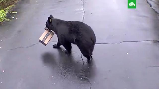 В США медведь попался на краже посылки.США, курьезы, медведи.НТВ.Ru: новости, видео, программы телеканала НТВ
