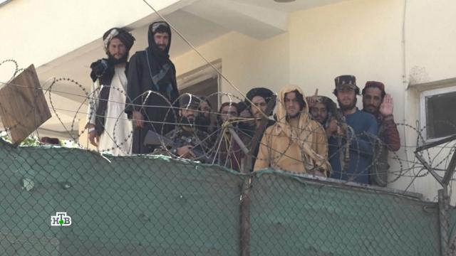 Министры из дикой пустыни: что известно о новом правительстве Афганистана.Афганистан, Талибан, терроризм.НТВ.Ru: новости, видео, программы телеканала НТВ