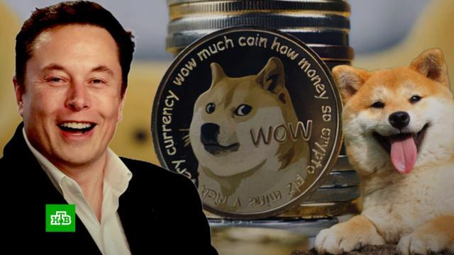 Илон Маск показал своего щенка и спровоцировал рост криптовалюты.Илон Маск, Интернет, криптовалюты, собаки.НТВ.Ru: новости, видео, программы телеканала НТВ