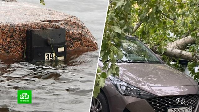Первый осенний шторм повалил деревья и подтопил улицы Петербурга.Санкт-Петербург, погода, штормы и ураганы.НТВ.Ru: новости, видео, программы телеканала НТВ