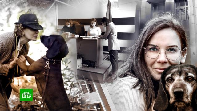 Женщины купили породистого пса вскладчину иделят его всуде.собаки, суды, Ярославль, Германия.НТВ.Ru: новости, видео, программы телеканала НТВ