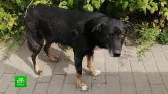 В Питере хозяйка-живодерка до смерти избила пса Гуфа.НТВ.Ru: новости, видео, программы телеканала НТВ