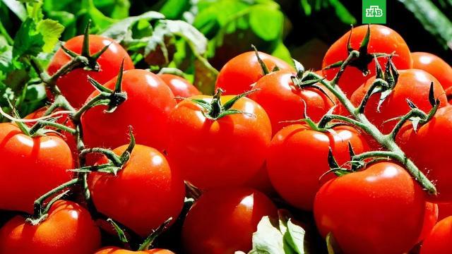 В Японии начали продавать помидоры для гипертоников.Японские ученые вывели сорт томатов, снижающих артериальное давление.болезни, кардиология, наука и открытия, продукты, растения, Япония.НТВ.Ru: новости, видео, программы телеканала НТВ