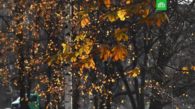Москвичам пообещали «заменитель» бабьего лета.В Москву к следующим выходным придет сухая и солнечная погода.Москва, погода.НТВ.Ru: новости, видео, программы телеканала НТВ