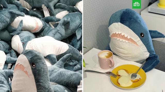 IKEA перестанет выпускать плюшевую акулу Blahaj.В апреле 2022 года IKEA снимет с производства свою знаменитую на весь мир плюшевую акулу Blahaj, сообщили в службе поддержки компании.IKEA, игры и игрушки.НТВ.Ru: новости, видео, программы телеканала НТВ