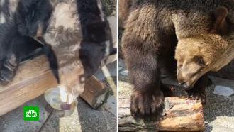 Двое из четырех медведей погибли после отравления в Челябинском зоопарке.НТВ.Ru: новости, видео, программы телеканала НТВ