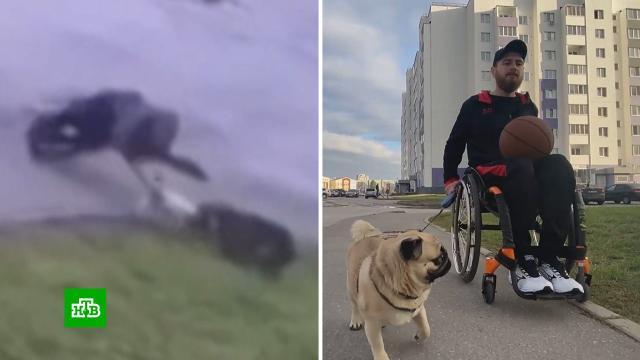 ВУльяновске инвалид-колясочник отбился от стаи бродячих псов изащитил свою собаку.Ульяновск, животные, инвалиды, нападения, собаки.НТВ.Ru: новости, видео, программы телеканала НТВ