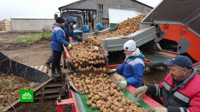 Битва за урожай: хватитли России овощей