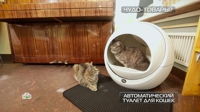 Автоматический туалет для кошек ираклетница-гриль.НТВ.Ru: новости, видео, программы телеканала НТВ