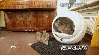 Автоматический туалет для кошек и<nobr>раклетница-гриль</nobr>