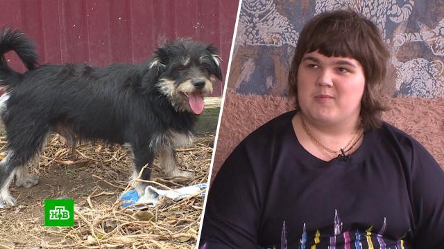 Соседи слепой девушки-инвалида требуют усыпить ее собаку.Крым, животные, скандалы, собаки.НТВ.Ru: новости, видео, программы телеканала НТВ